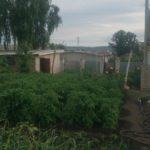 Продаю дом в Жирновске